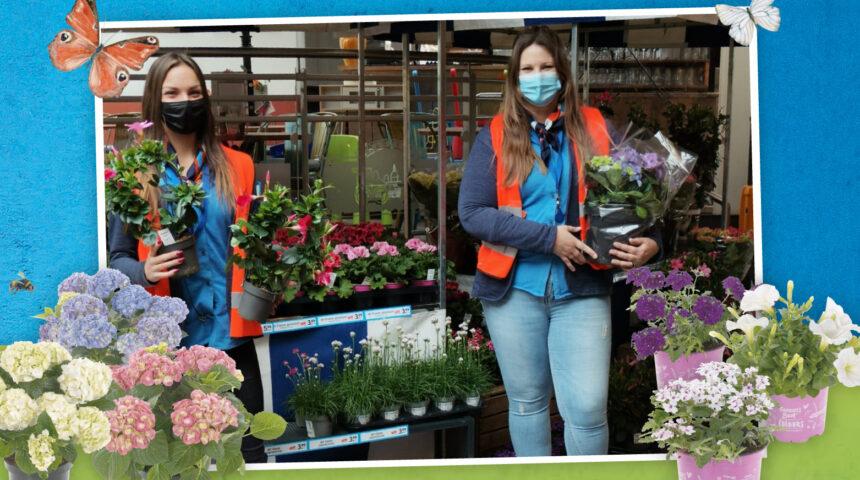 Plantjesmarkt lente